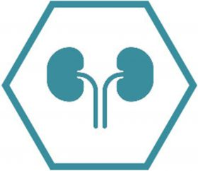 Icon Nephrology